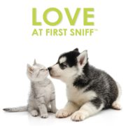 FF Love at First Sniff